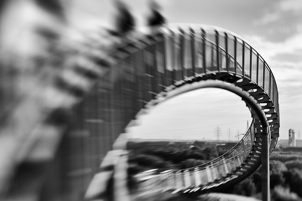 Tiger & Turtle 01